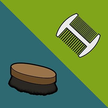 Beard Brush or Beard Comb for grooming kit?